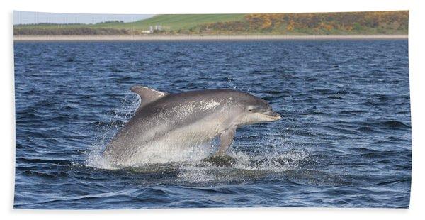 Bottlenose Dolphin - Scotland  #32 Beach Towel