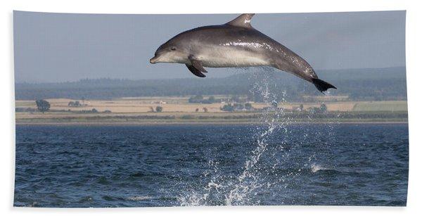 High Jump - Bottlenose Dolphin  - Scotland #42 Beach Towel