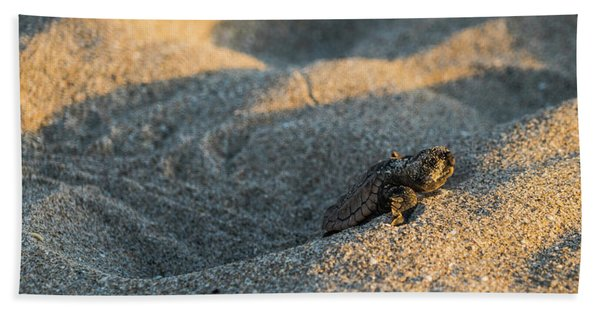 Brave Beginnings Sea Turtle Hatchling Delray Beach Florida Beach Towel