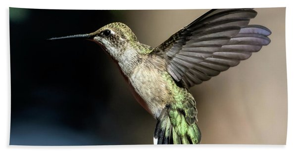 Broad-tailed Hummingbird Female Beach Towel