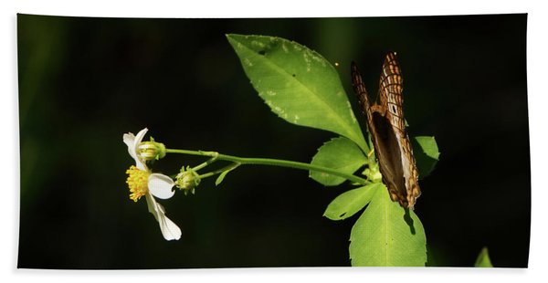 Brown Butterfly On Leaves Beach Towel