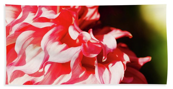 Beach Towel featuring the photograph Butchart Dahlia By Mike-hope by Michael Hope