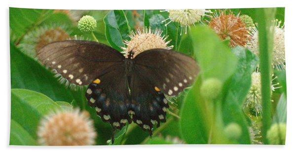 Butterfly Spicebush  Beach Towel