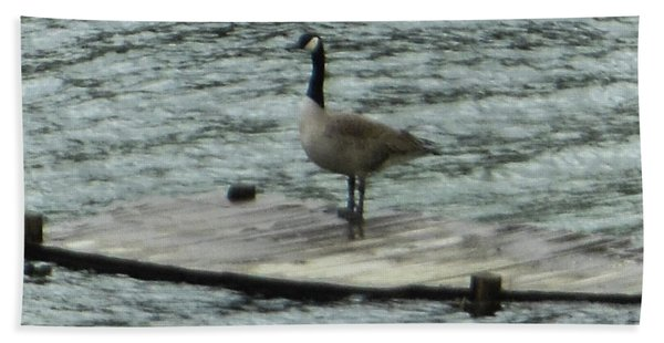 Canada Goose Lake Dock Beach Towel
