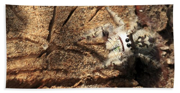 Canopy Jumping Spider Beach Towel