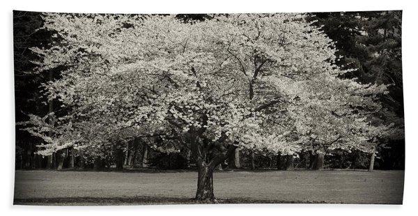 Cherry Blossom Tree - Ocean County Park Beach Towel