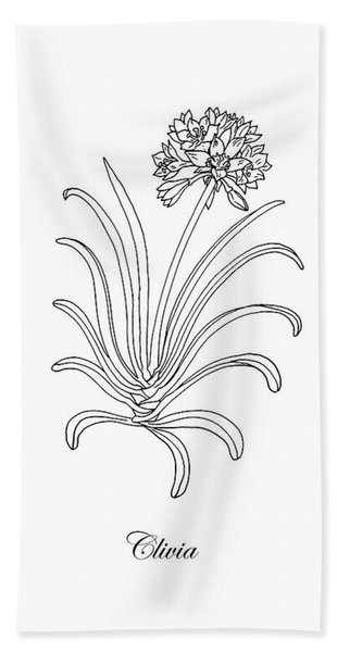 Clivia Flower Botanical Drawing Beach Towel