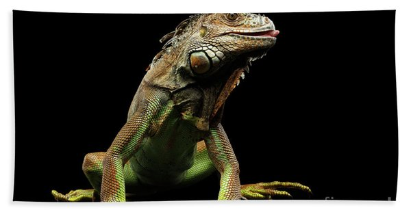 Closeup Green Iguana Isolated On Black Background Beach Towel