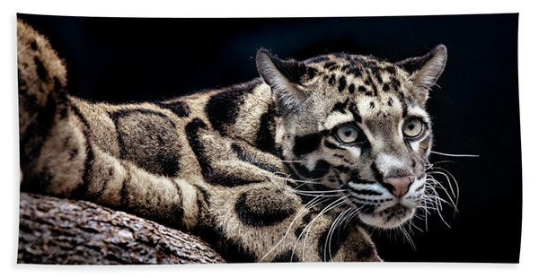 Beach Towel featuring the photograph Clouded Leopard by David Millenheft