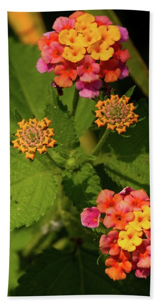 Cluster Of Lantana Flowers Beach Towel