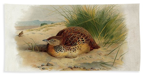 Common Buttonquail By Thorburn Beach Towel