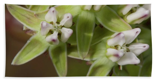 Curtiss' Milkweed #4 Beach Towel