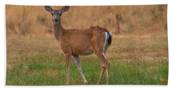Deer At Sunset Beach Towel