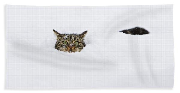 Domestic Cat Felis Catus In Deep Snow Beach Towel