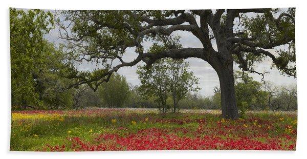 Drummonds Phlox Meadow Near Leming Texas Beach Towel
