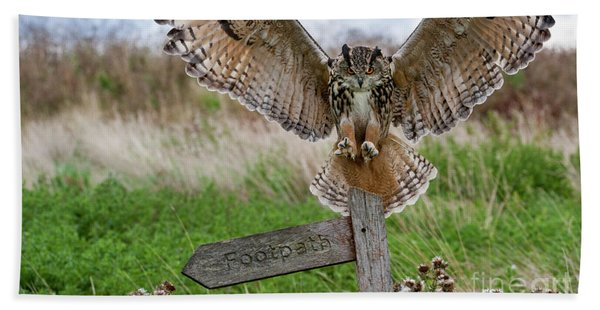 Eagle Owl On Signpost Beach Towel