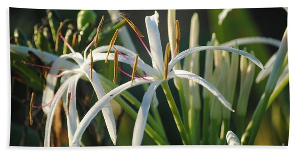 Early Morning Lily Beach Towel