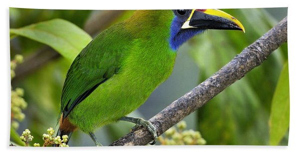 Emerald Toucanet Beach Towel