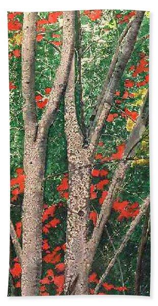 Enchanted Birches Beach Towel