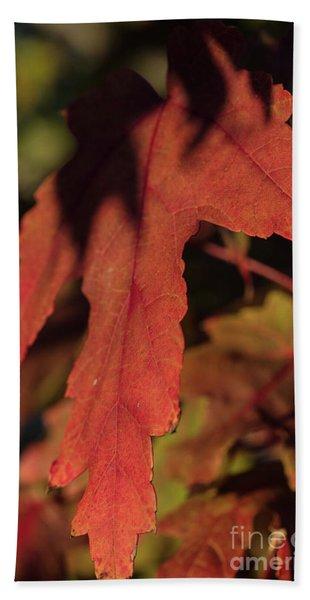 Fall Color 5528 16 Beach Towel