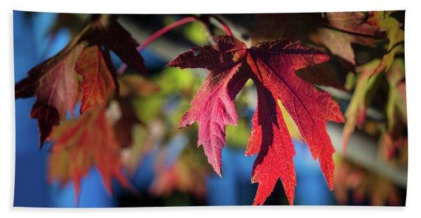 Fall Color 5528 19 Beach Towel