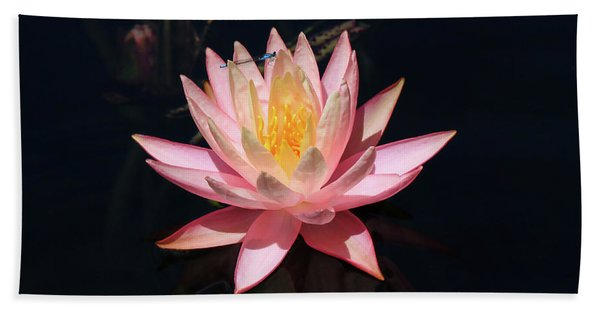 Familiar Bluet Damselfly And Lotus  Beach Towel