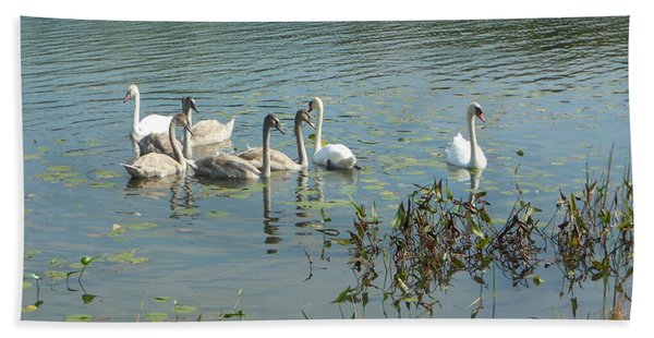 Family Of Swans Beach Towel