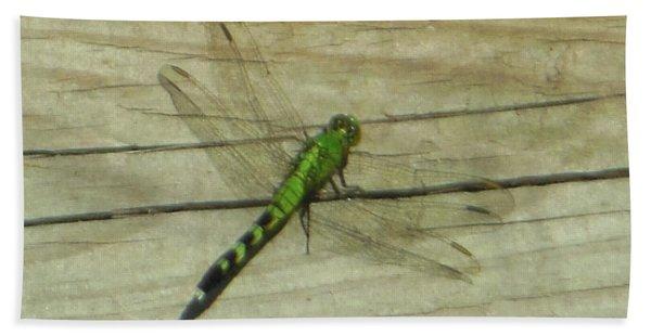 Female Eastern Pondhawk Dragonfly Beach Towel