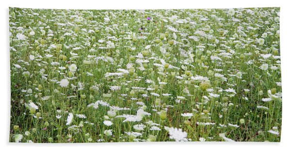 Field Of Queen Annes Lace Beach Towel