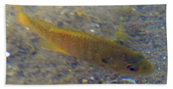 Fish Sandy Bottom Beach Towel