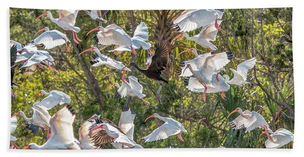Flock Of Mixed Birds Taking Off Beach Towel