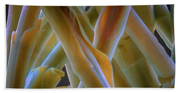 Beach Towel featuring the photograph Flower Stems by Tom Singleton
