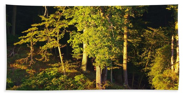 Forests Edge Beach Towel
