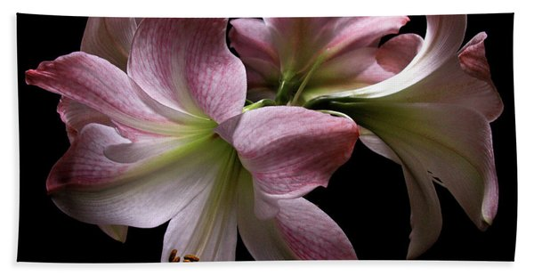 Four Pink Amaryllis Blooms Beach Towel