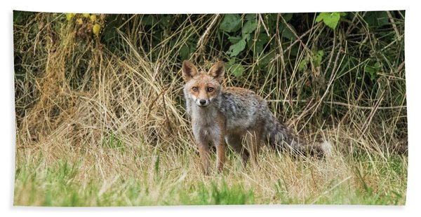 Fox In The Woods Beach Towel