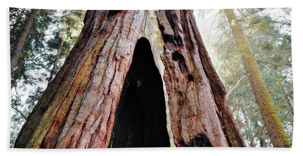 Giant Forest Giant Sequoia Beach Towel