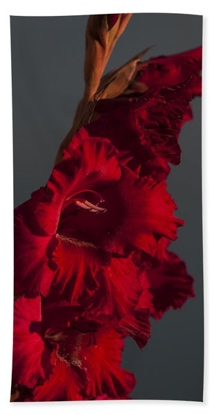 Gladiolus Against A Dark Cloud Beach Towel