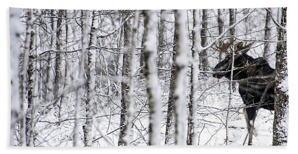Glimpse Of Bull Moose Beach Towel