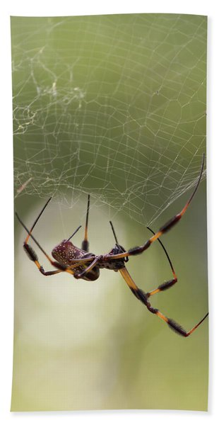 Golden-silk Spider Beach Towel