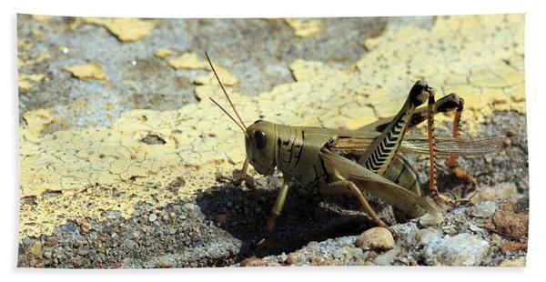 Grasshopper Laying Eggs Beach Towel