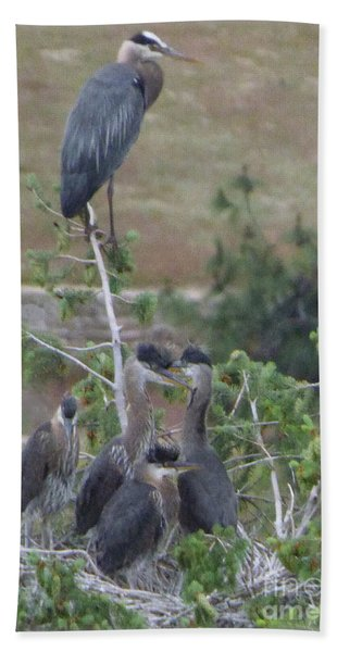 Great Blue Heron Watching Over Nest Beach Towel
