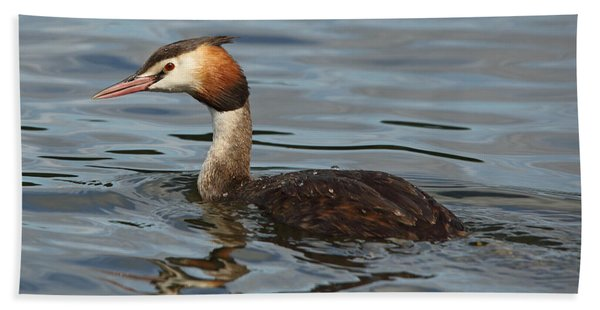 Great Crested Grebe Beach Sheet