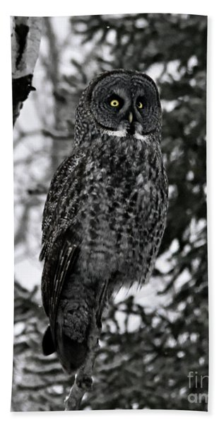 Great Grey Owl Portrait Beach Towel
