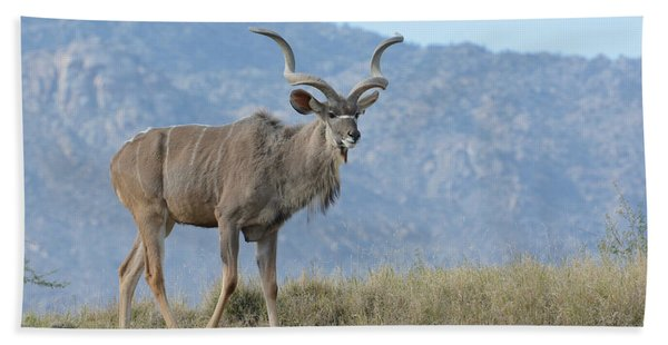 Greater Kudu 2 Beach Towel