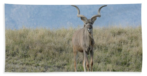 Greater Kudu 3 Beach Towel