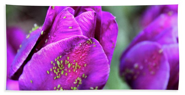Aphids On Purple Tulips Beach Towel