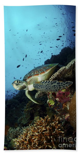 Green Sea Turtle Resting On A Plate Beach Towel