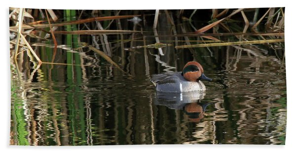 Green Winged Teal  Beach Towel