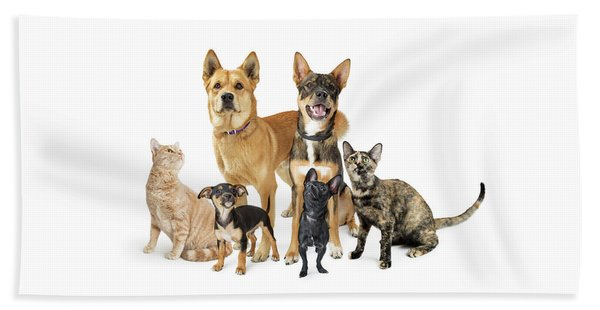 Group Of Cats And Dogs Looking Up On White Beach Towel