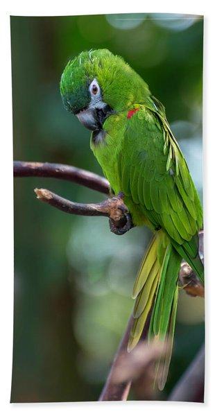 Hahn's Macaws Beach Sheet